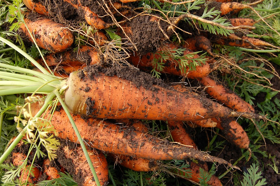 Удобрение моркови минеральными удобрениями