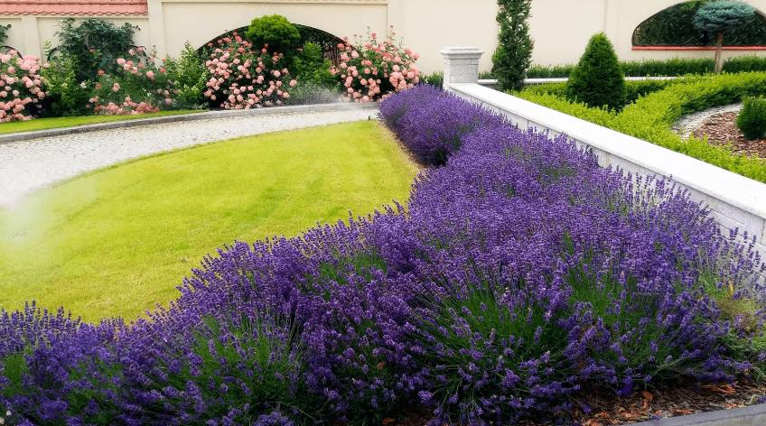 Многолетние цветы и кустарники