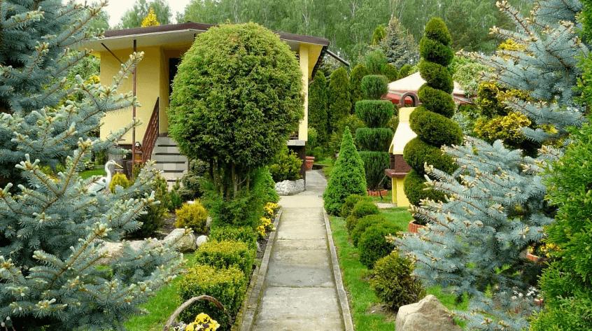ландшафтный дизайн с применением кустарников